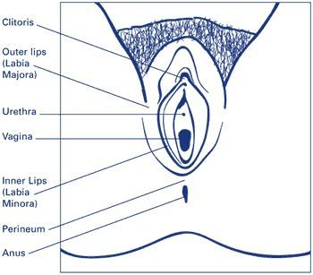 types of labia